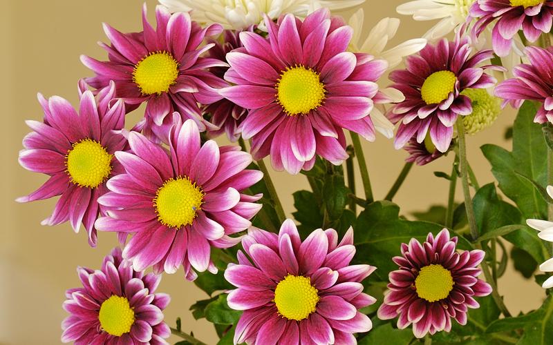 Flores de salón, mayo 2011