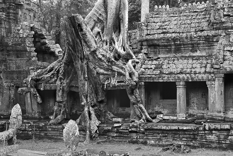 Ta Prohm. Abril 2011