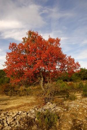 Color de otoño, Alto Tajo octubre 2013