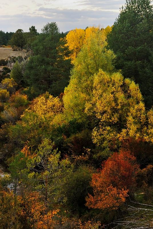 Colores, Alto Tajo octubre 2013