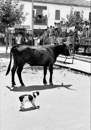 Vaquillas, Macastre País Valencià años 80