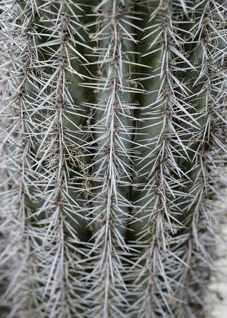 Cactus. Diciembre 2014