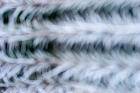 Desenfocado, cactus. Diciembre 2014