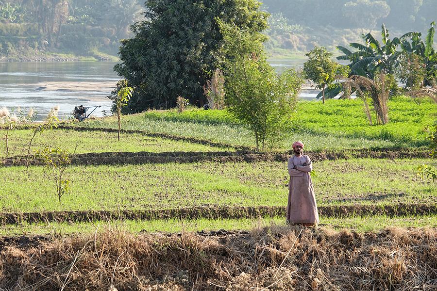 Agricultor, ribera del Nilo, dicembre 2014
