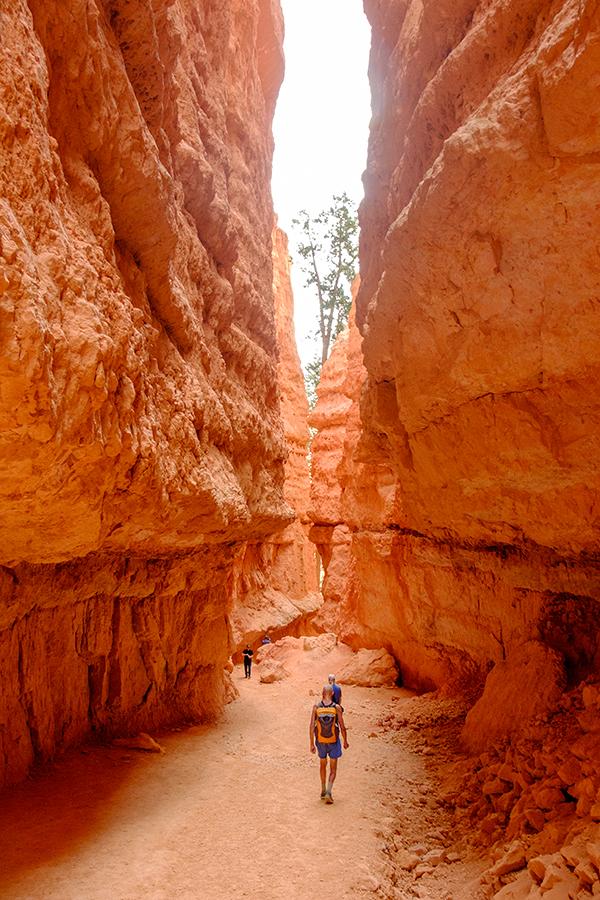 Navajo loop, Bryce Canyon, junio 2016