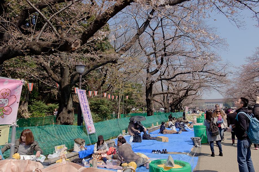 Hanami, Ueno, Tokio marzo 2017