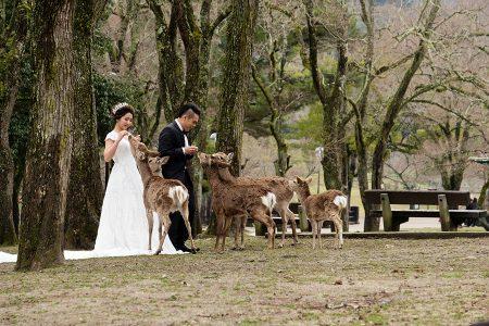 Novios y ciervos. Nara abril 2017