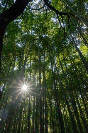 Bosque de Bambú, Arashiyama abril 2017