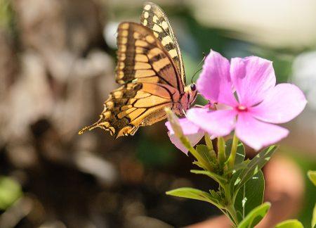 Mariposa agosto 2017