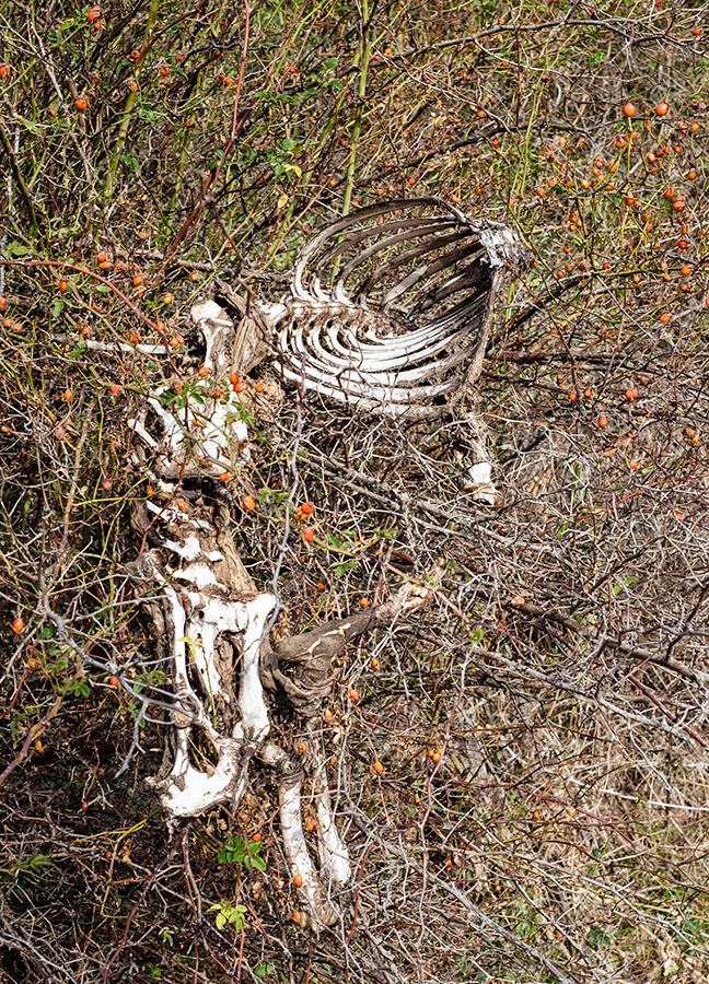 Muerte seca, Alto Tajo septiembre 2017
