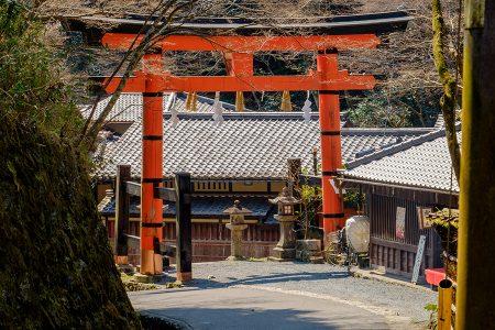 Tori, Arashiyama  abril 2017