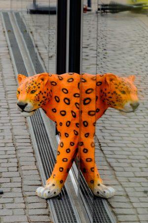 Leopardo y Pardoleo en Copenhague, octubre 2017