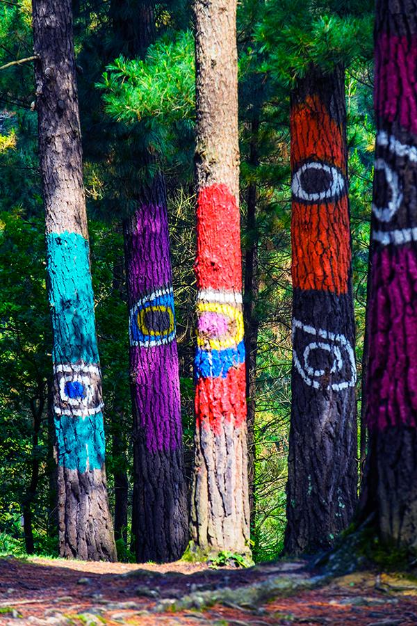 Bosque pintado de Oma, mayo 2018
