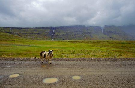 Carretera 95, Islandia, agosto 2018