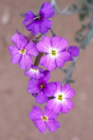 Flor de la Devesa, mayo 2019