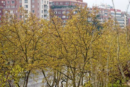 Primavera desde mi ventana, marzo 2020