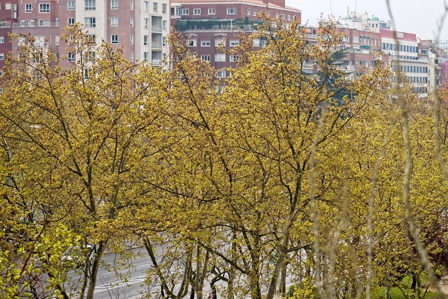 Primavera #desdemiventana, marzo 2020
