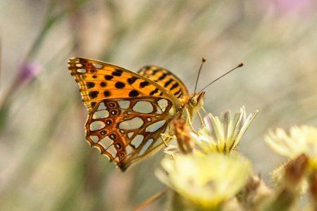 Mariposa, junio 2020