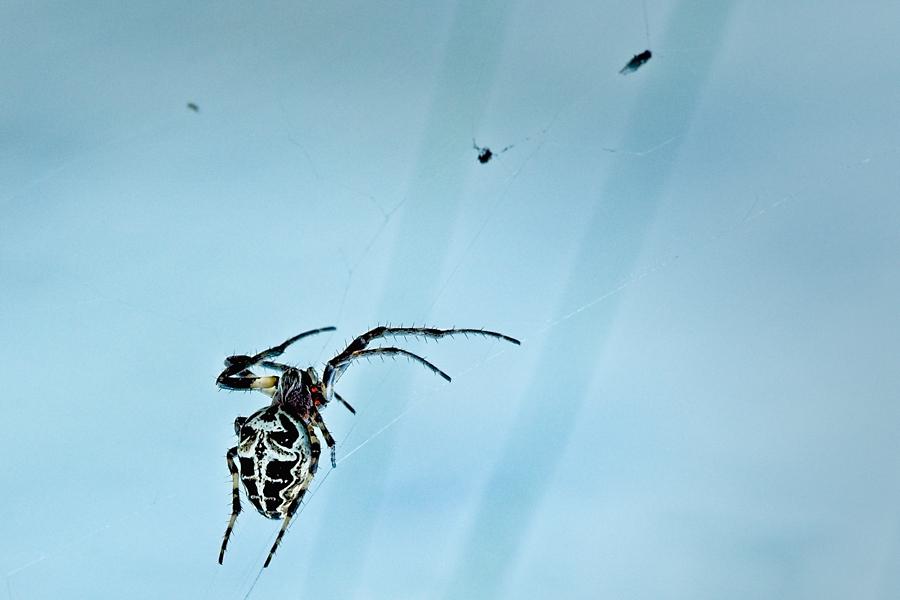 Araña, julio 2020