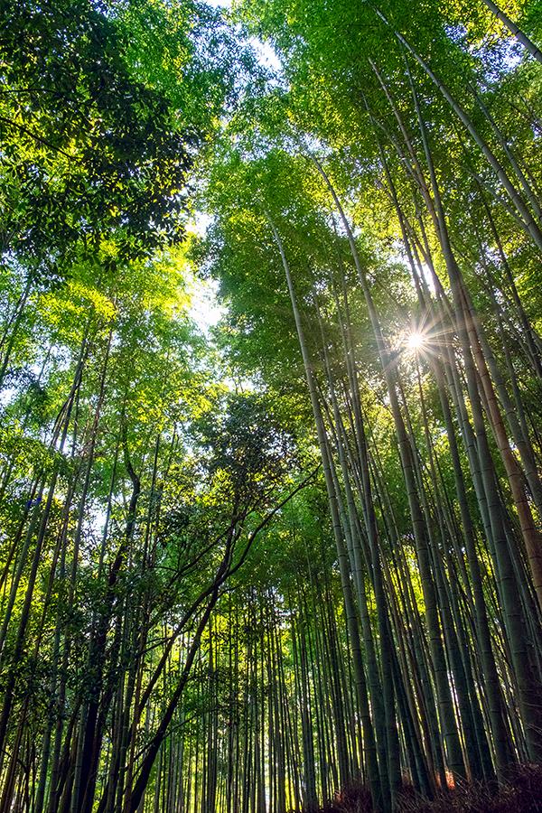 Bosque del este, Arashiyama abril 2017