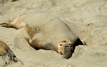 No molestar. Big Sur California junio 2012